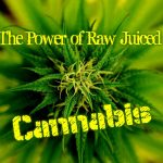 Juicing Cannabis Leaves – Myth or Miracle Cure?
