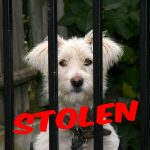 Missing my dog … these are the 12 most frequently stolen pet dog breeds