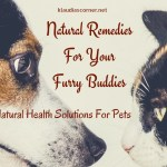 Natural Remedies For Pets – Natural Health Solutions For Your Furry Buddies