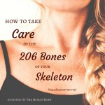 Anatomy Of The Human Body – How to Take Care of the 206 Bones of Your Skeleton