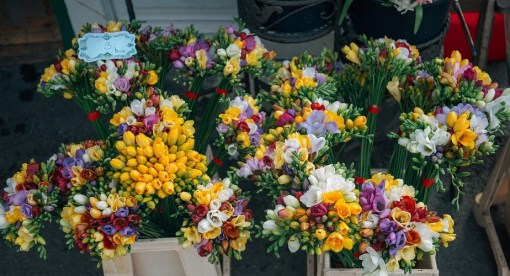 World of Flowers - The Beauty of Flowers and their Meanings
