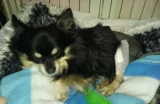My Dog is limping - A diary about knee surgery in dogs I klaudiascorner.net©