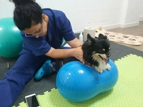 My Dog Is Limping, What's Wrong? - Knee Surgery In Dogs