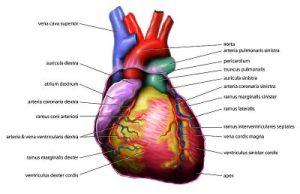 Causes Of Deep Vein Thrombosis - ©klaudiascorner.net