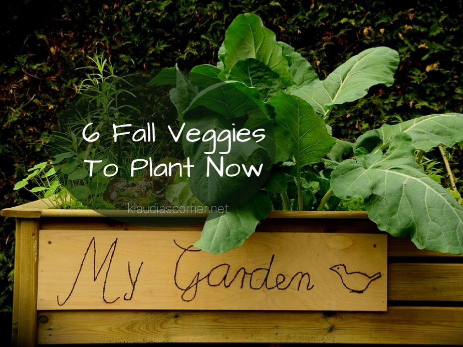 Fall Garden Planting Guide - 6 Fall Veggies to Plant Now
