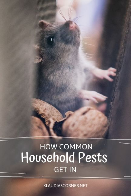 Household Pest Control Tips - klaudiascorner.net