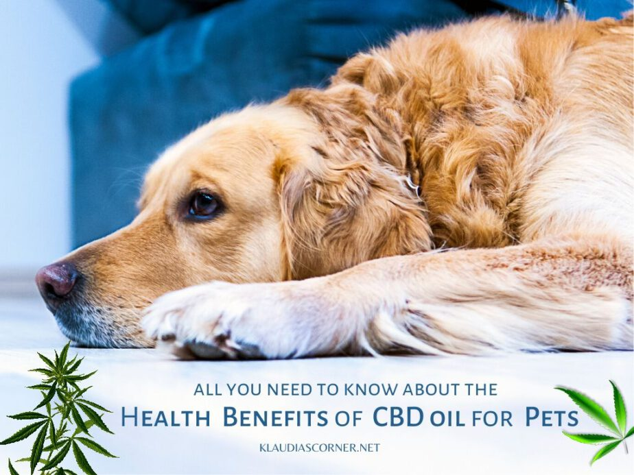 CBD Oil For Pets – Health Benefits Of CBD Oil For Your Pets