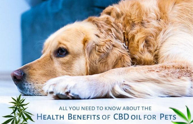 CBD Oil For Pets - Health Benefits Of CBD Oil For Treating Your Pets