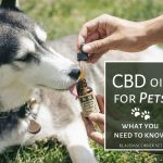 What Is CBD Oil For Pets? – What‌ ‌You‌ ‌Need‌ ‌to‌ ‌Know‌
