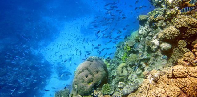 Great Barrier Reef - The Most Beautiful Places in Australia