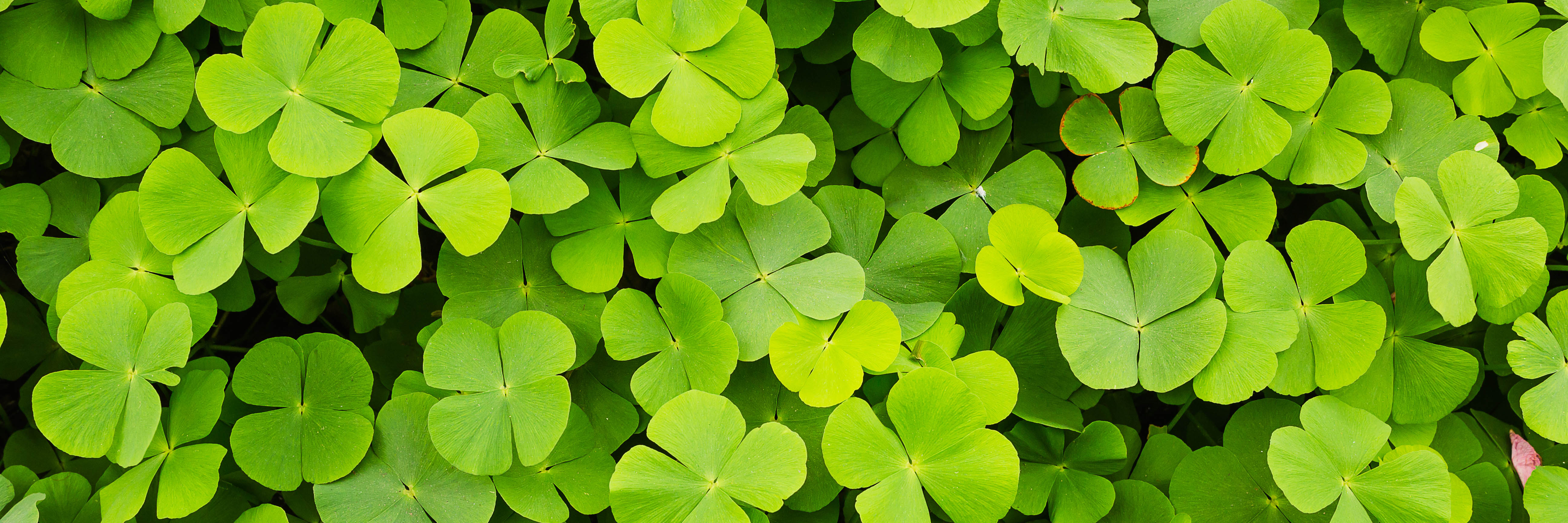 St Patricks Day Email  Our 10 Favorite Examples  Klaviyo