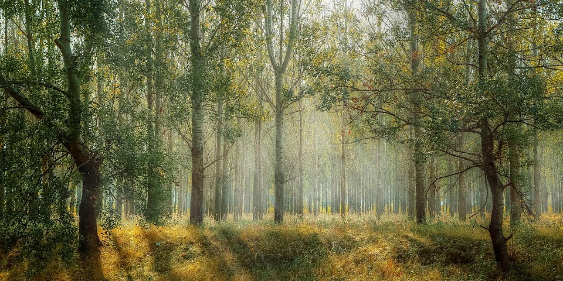 Abgestorbene Bäume werden gefällt