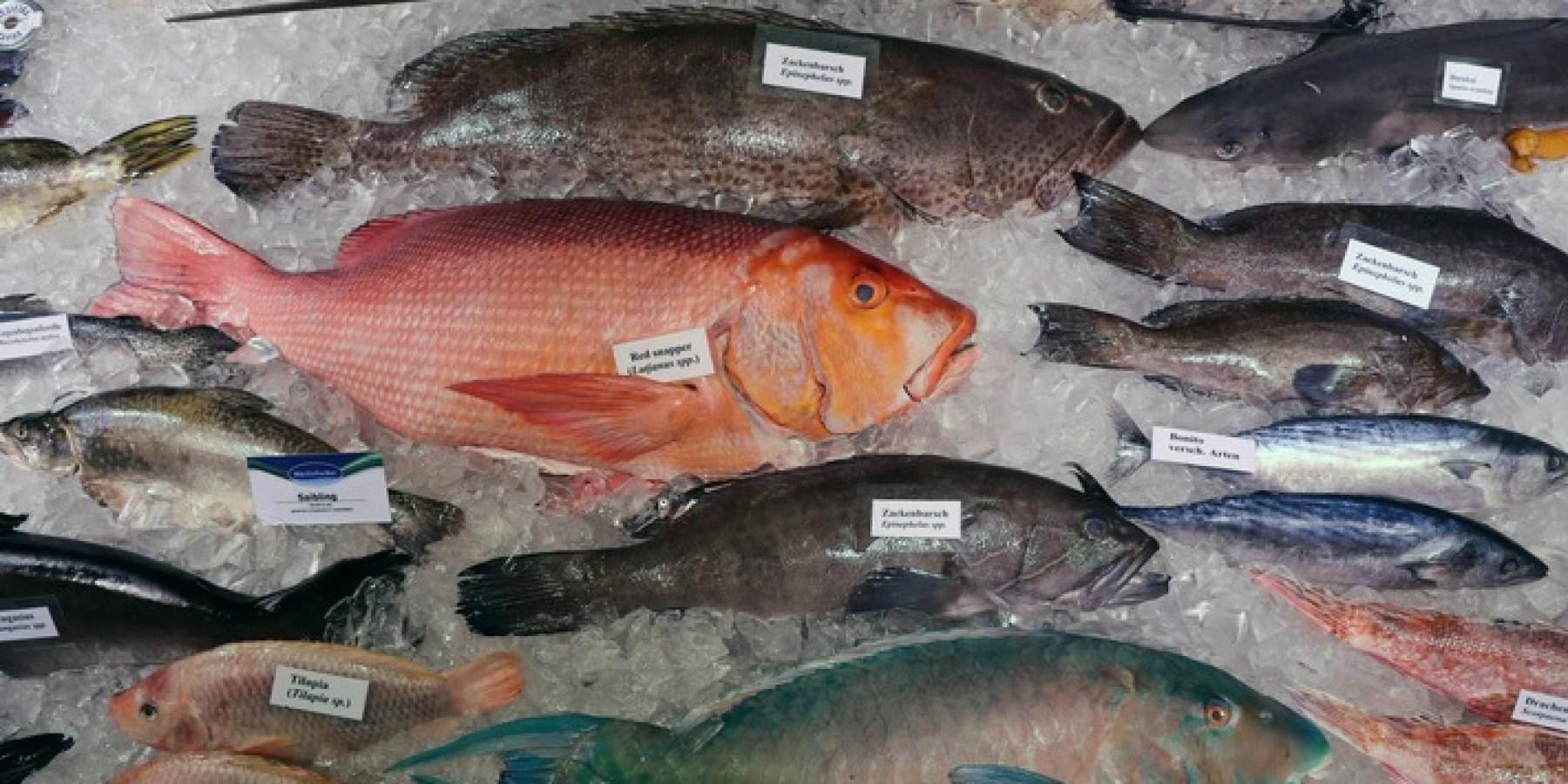 Hohe Wertschätzung für Fisch und Meeresfrüchte