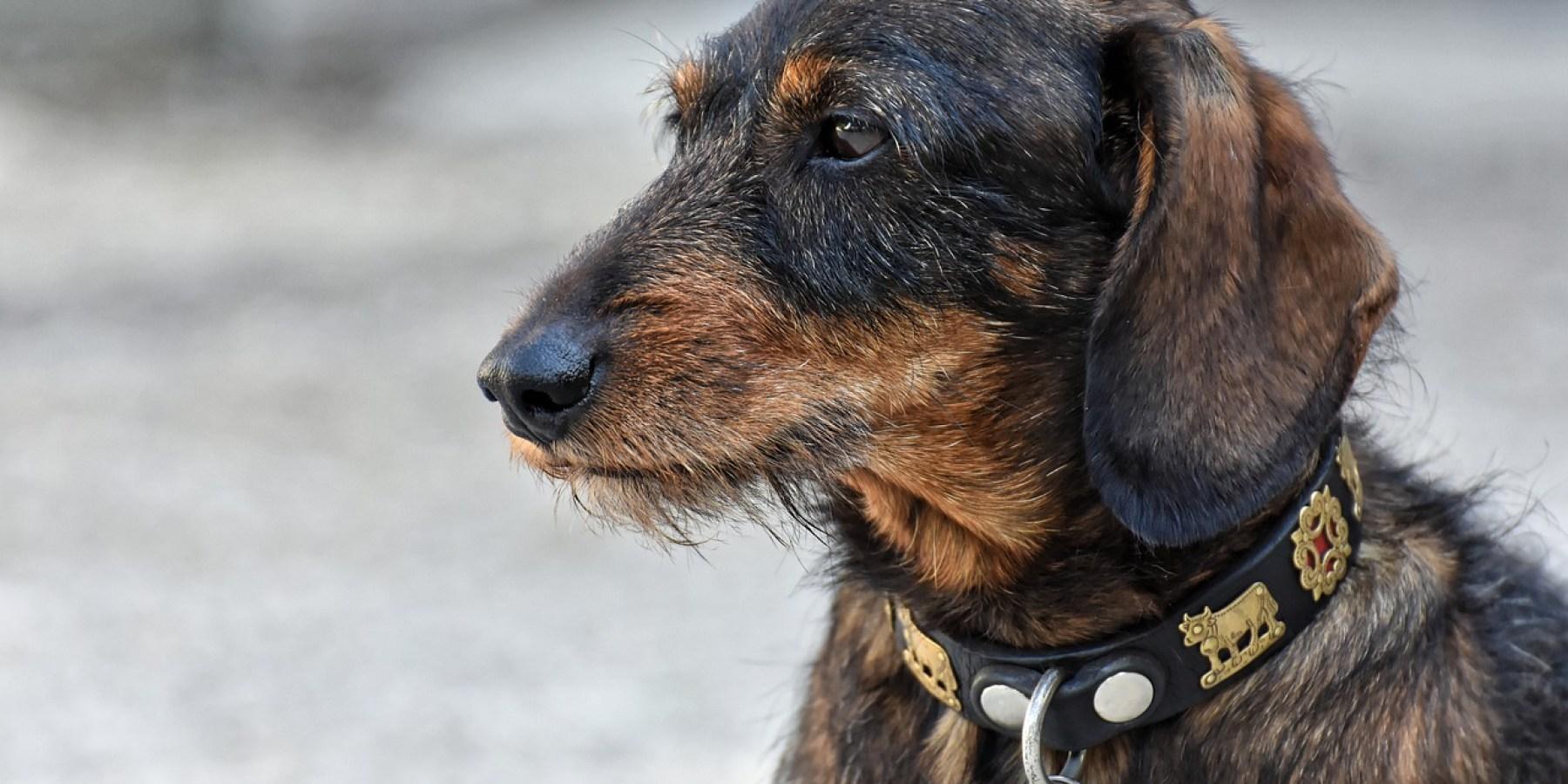 Hundespaziergänger wird von Räuberduo überfallen und attackiert