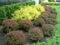 Deer Resistant Plants for The Philadelphia Area - Trees ...