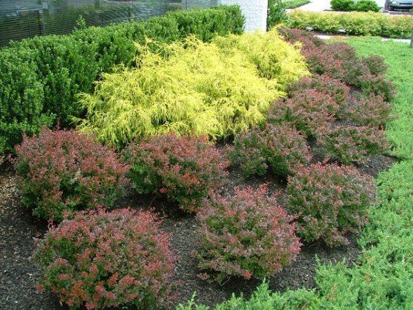 deer resistant plants philadelphia