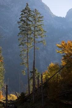 Bäume am Röthkessel im Gegenlicht