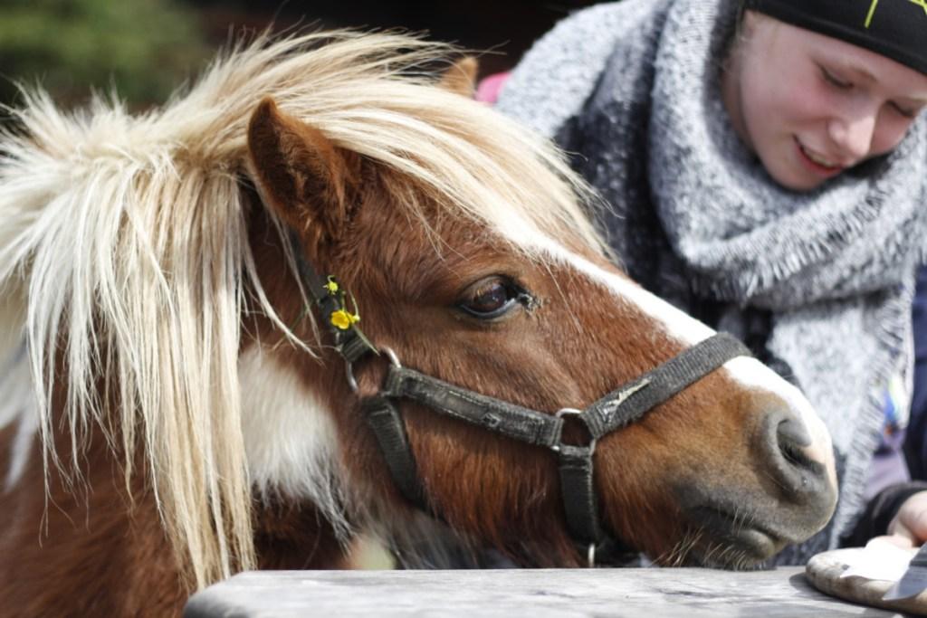 Pony mit Mädchen
