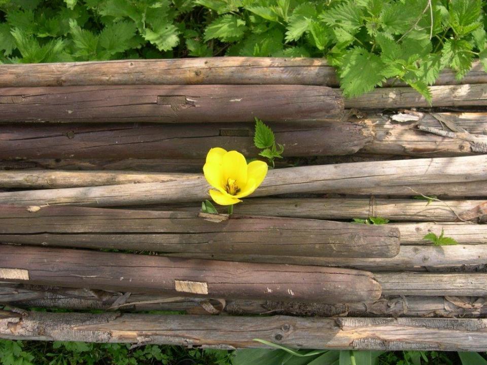 Holz-Lamby