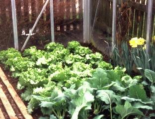 Gewächshaus Für Gemüse Anbau Von Tomaten Gurken Paprika