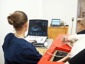 Ultraschalluntersuchung am Herz
