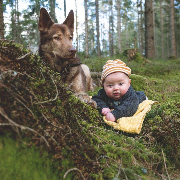 Hund som morrar   Detta bör du veta först!