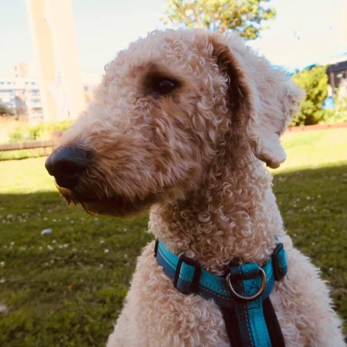 1. Hundmöteskurs – på gott och ont, Se upp för att bli lurad!