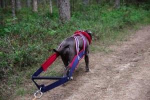 kätting till hund