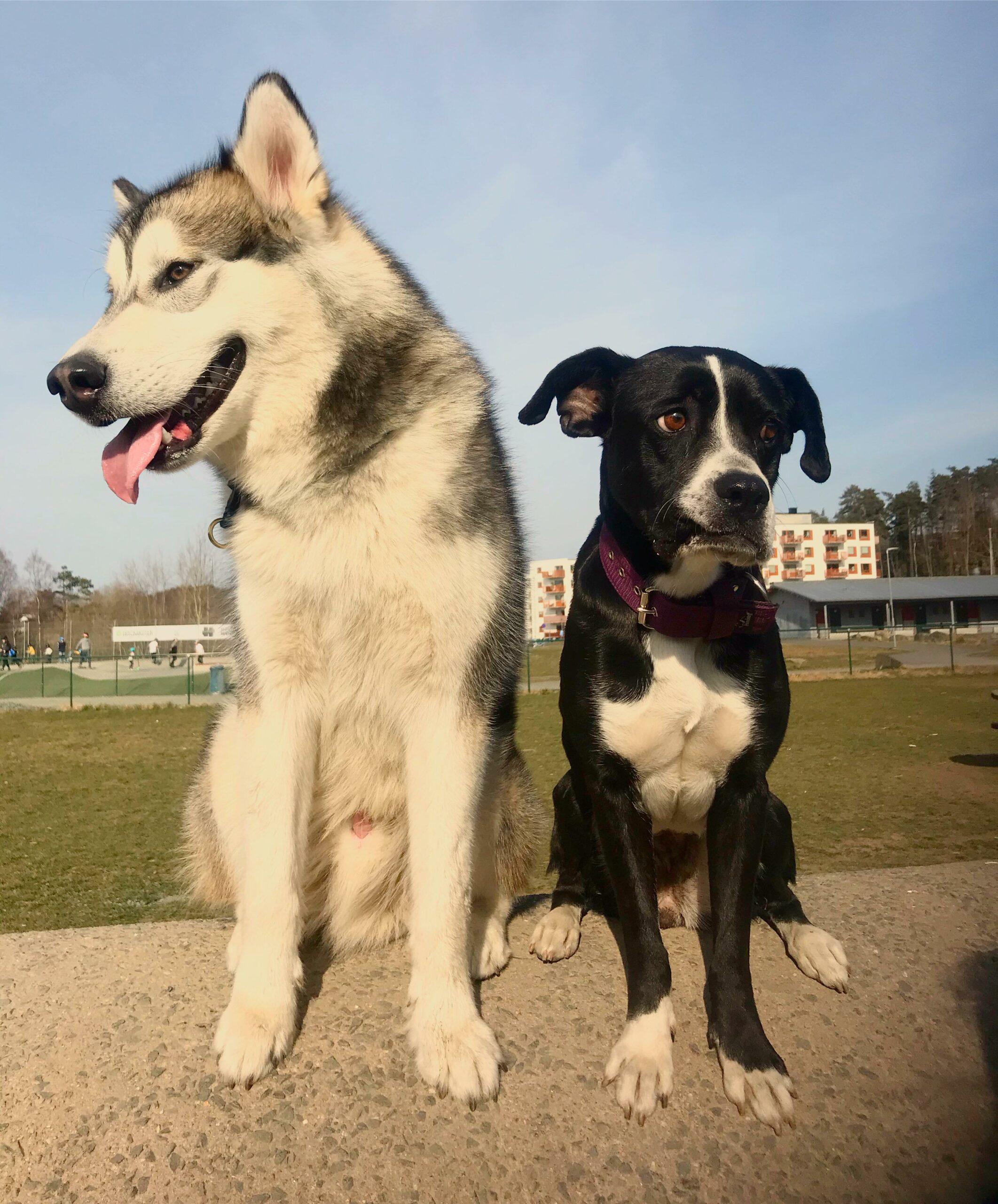 Hundkurser Göteborg