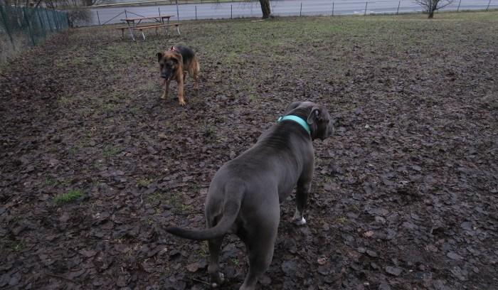 Hundar som biter och nafsar