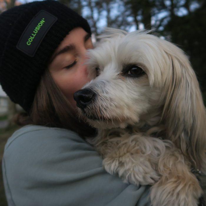 Rädda osäkra hundar