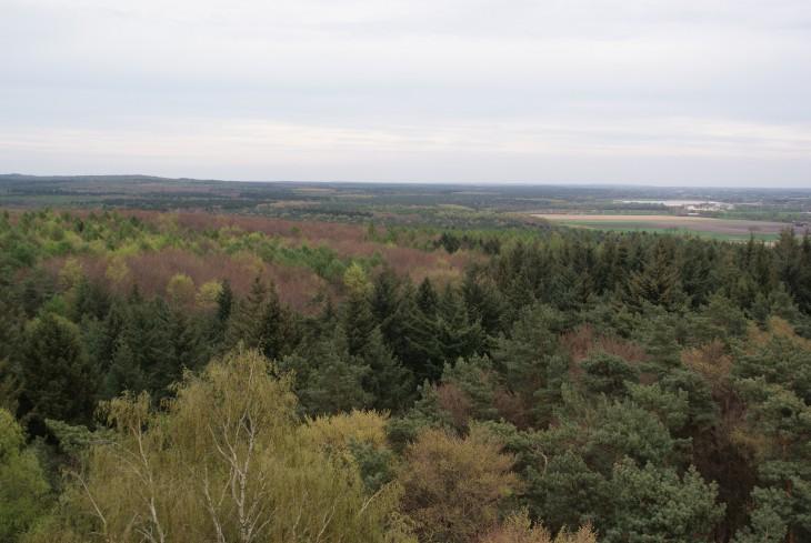 Blick über den Reichswald, ohne Nutzung der Windenergie (noch)