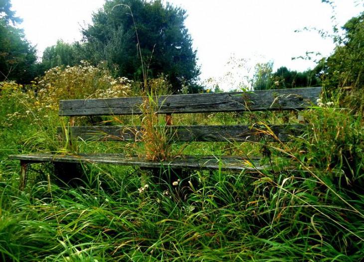 Greenback (Foto © Claudia Philipp