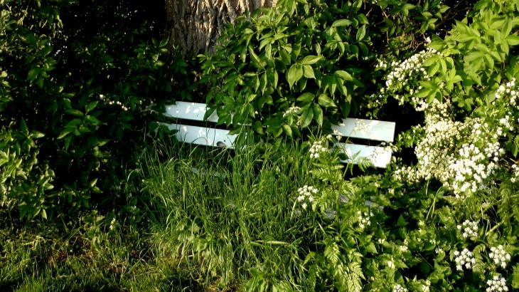 Nomen est omen: Grüner Weg, Rindern (Foto © Johann Walter)