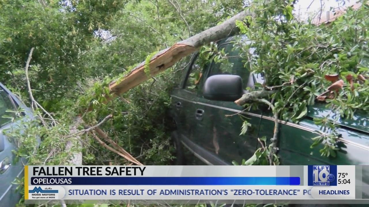 Tree_Safety_0_20180618221244