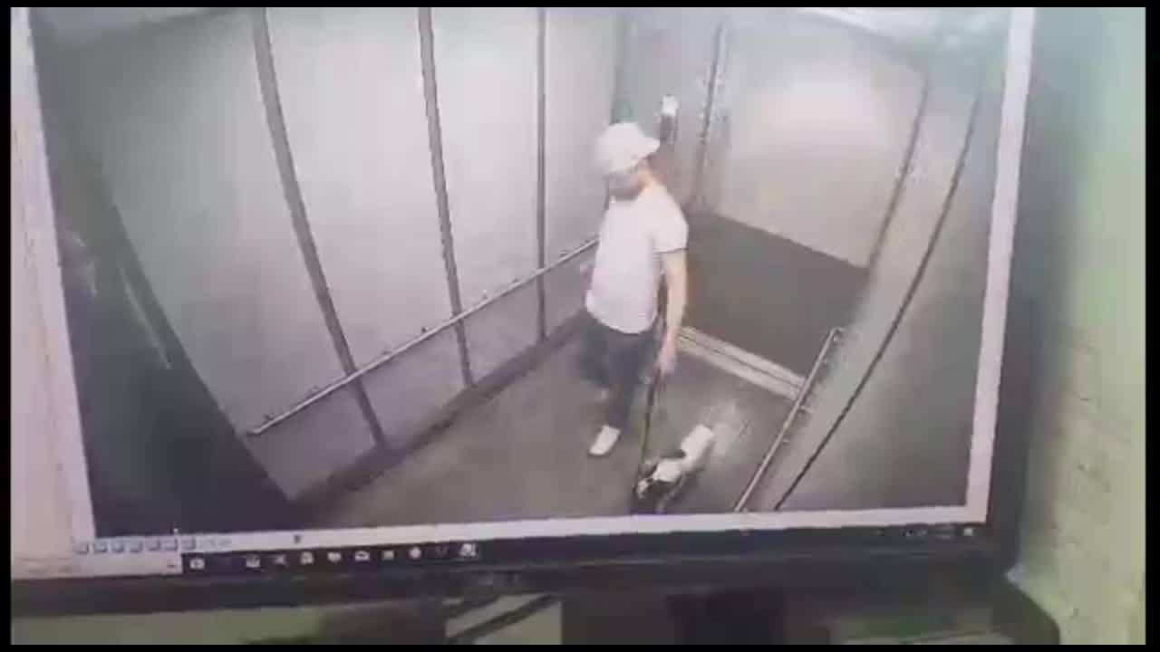 Man_attacks_dog_in_elevator_1_20190612211127-873703986-873703986