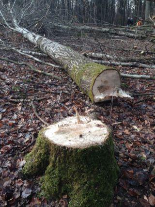 Sinnbild für den Danneröder Wald am 30.11.2020 (C) Uli Mandel