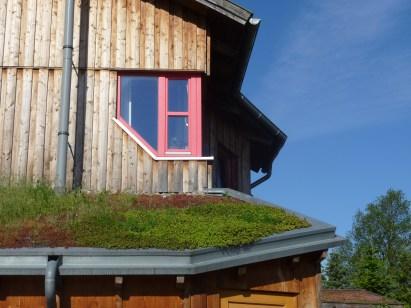 Begrüntes Dach