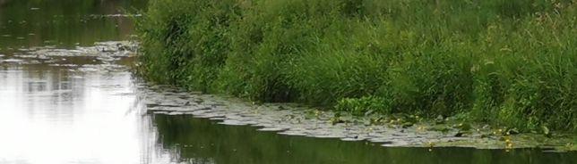 Uferbereich in den Lippeauen Foto: J. Hundorf