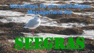 thumbnail of nachhaltige Verwertung von Seegras