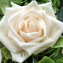 KLINGBLUME  Ihr Blumenladen in Neus Steppach bei Augsburg
