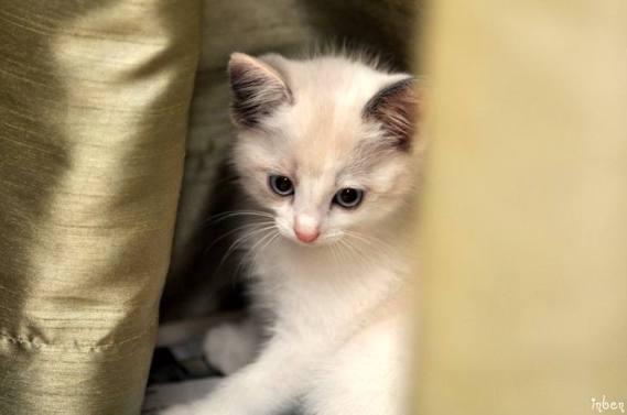 fotos de gatos imagenes