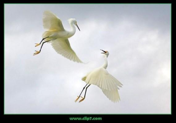 Fotografia aves en vuelo