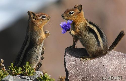 Imagen tierna pareja ardillitas