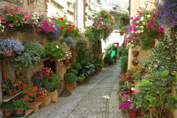 Fondos de escritorio: hermoso callejon floreado