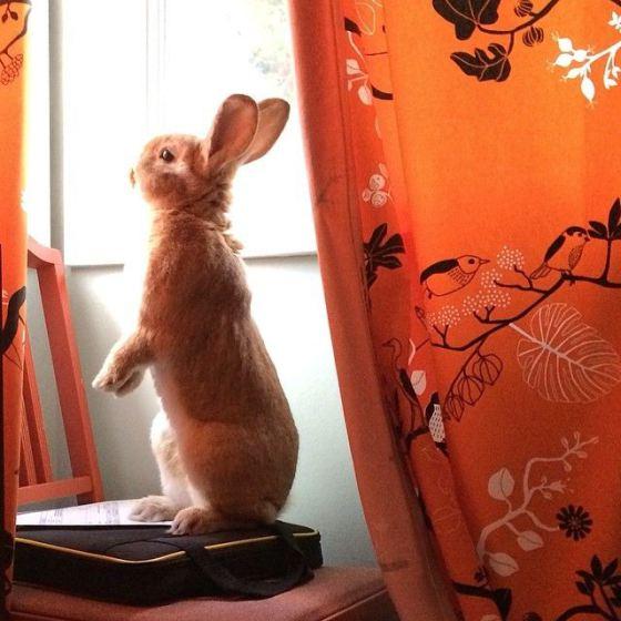 Simpatica imagen de conejo