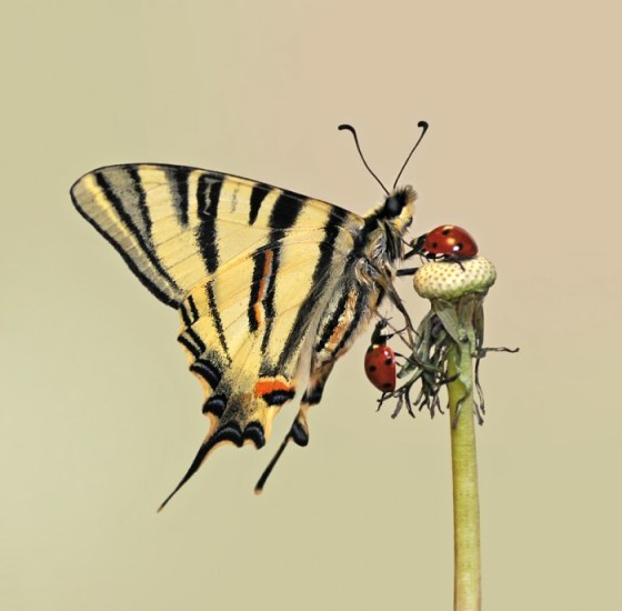 fotografia mariposa