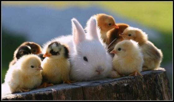Imagenes de animales bebes