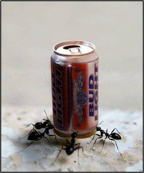 imagen de hormigas y lata de bebida