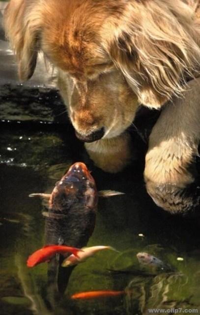 Imagenes de Coleccion: Foto perro y pez mirandose